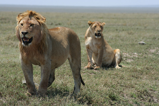 3 Days Maasai Mara Flying Package