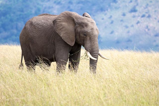 Kenya & Tanzania Enter Deal to Monitor Mara and Serengeti