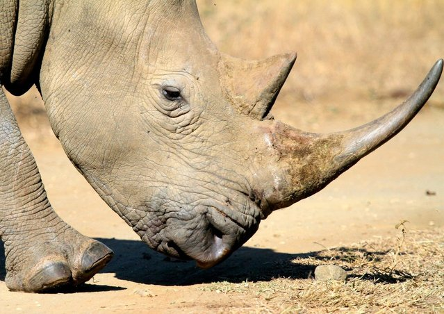 President Zuma to Attent Anti-Rhino Poaching Awareness Day