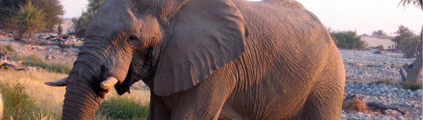 Mara Gates Safaris