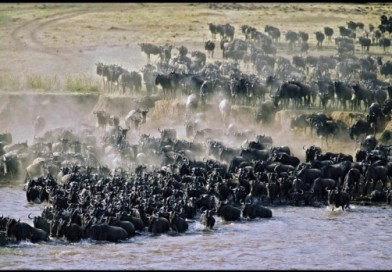 East Africa Safari Offers