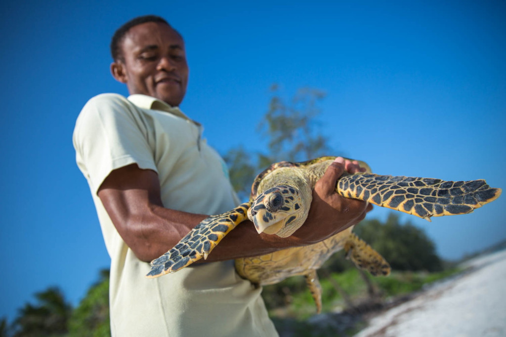 KENYA, Watamu: In a photograph taken by Make It Kenya 11 Decmeber 2015, Fikiri Kiponda, a member of the Local Ocean Trust team, carries a Hawksbill turtle for release back to the ocean from a deserted beach along Kenya' Indian Ocean coast. The Local Ocean Trust and Watamu Turtle Watch work to protect both the future of sea turtles and the wider fragile marine environment along Kenya's Watamu stretch of coastline through nest-monitoring and protection of turtle nesting sites,  practising a catch and release programme working closely with local fisherman who inadvertently catch sea turtles in the nets, and conservation education and awareness outreach with local communities. MAKE IT KENYA PHOTO / STUART PRICE.