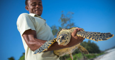Hawksbill Turtle Pic