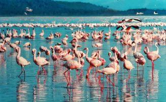 Nairobi to Lake Nakuru National Park Guide