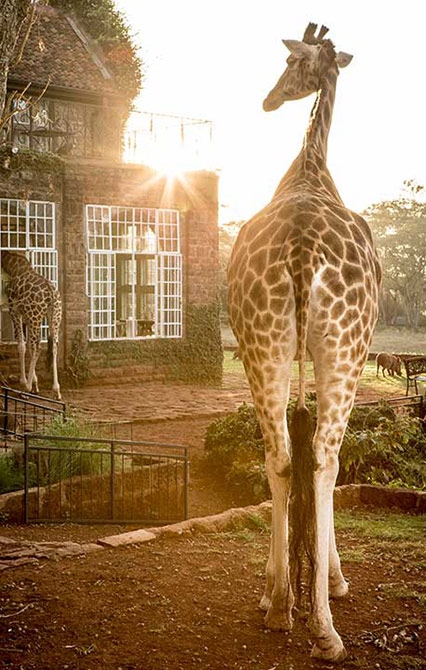 giraffe manor rates